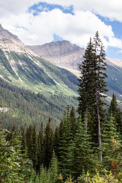 trees, Iceline trail