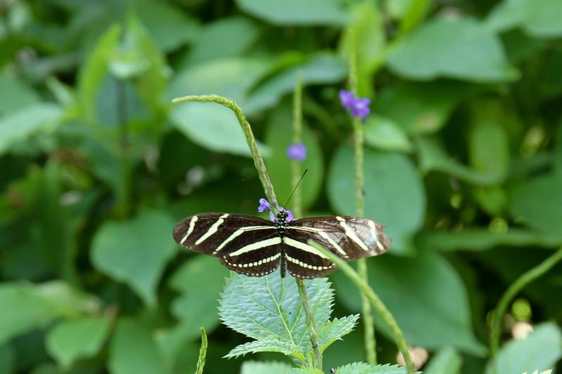 nanaples_botanical_garden_0007-LR.jpg