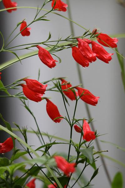 garden (145).jpg