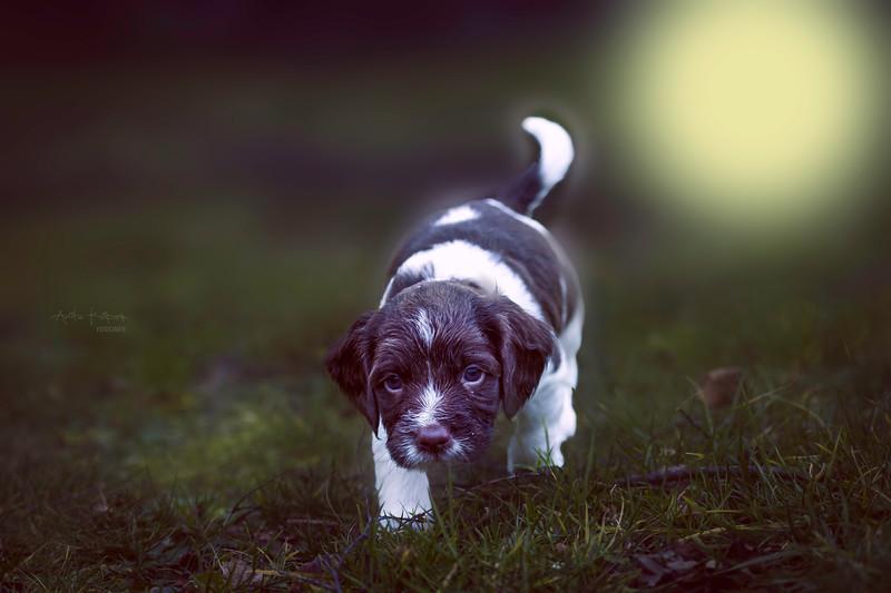 Pup buiten.jpg