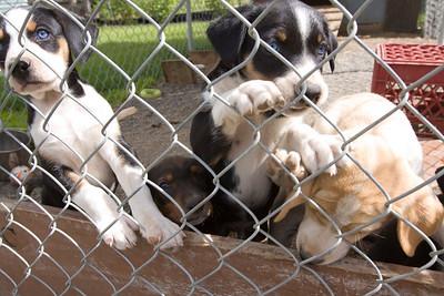 Bev Stevens Puppies #1