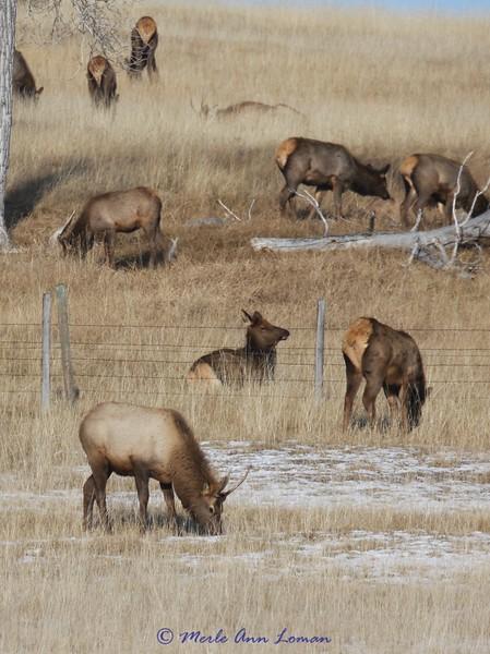 Places - Montana, hiking, skiing, wildlife refuges, etc.