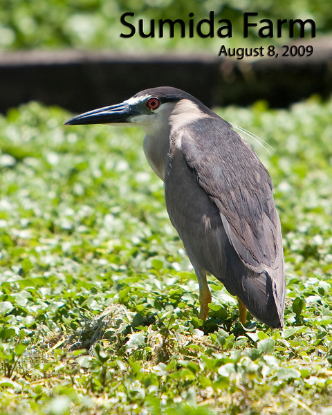 Bird Images - August 8, 2009