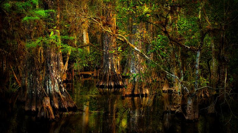 Forest Shadows-038.jpg