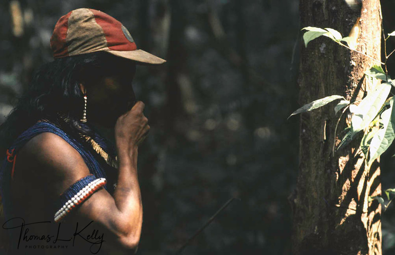 Kayapo man picking herbal plants for medicine.Kayapo, Brazilian Amazon.
