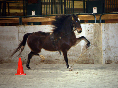 Majestic Oaks Show Ponies Working