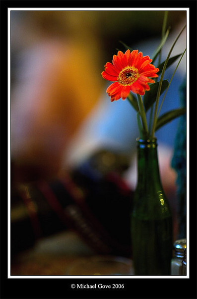 Pub flower (68583085).jpg