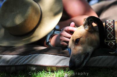 GreySave Greyhound Adoption