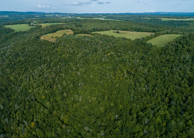 Forksville 35.5 acre