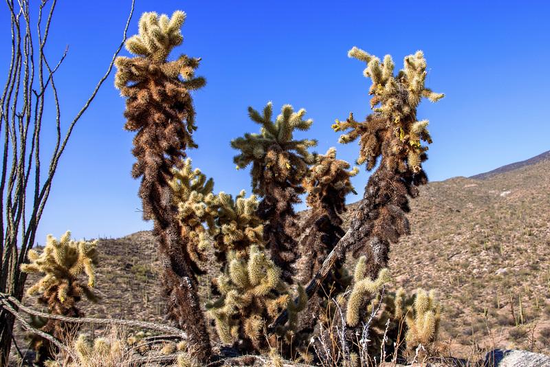 Arms of a Desert Monster