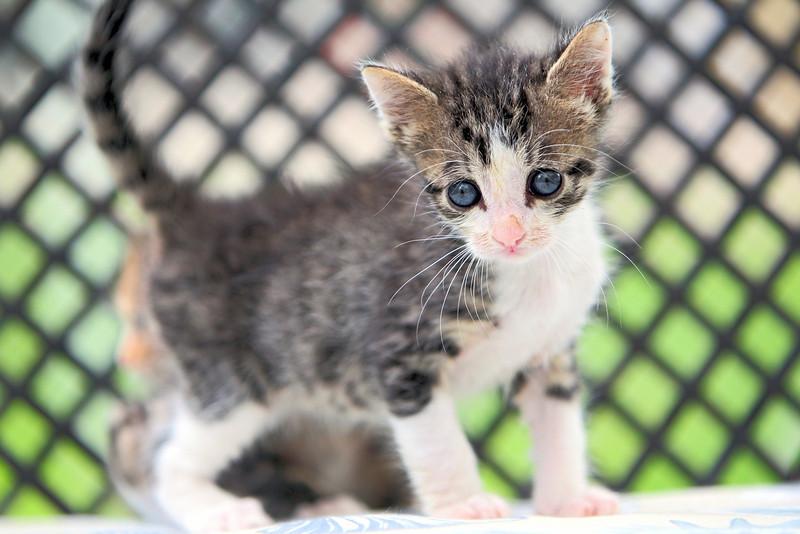 kittens_007-1.jpg