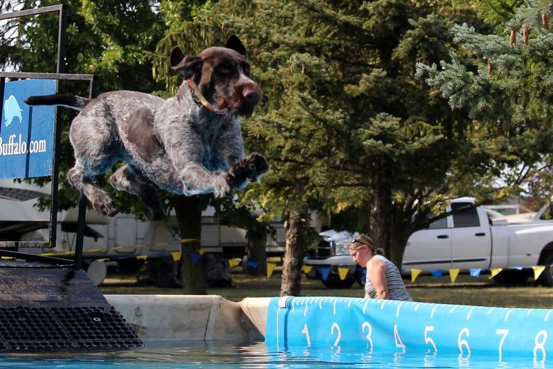 2015.8.6 Winnebago County Fair Dock Dogs (95).JPG