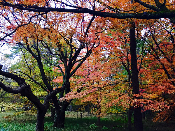 Imperial Palace Park in Autumn