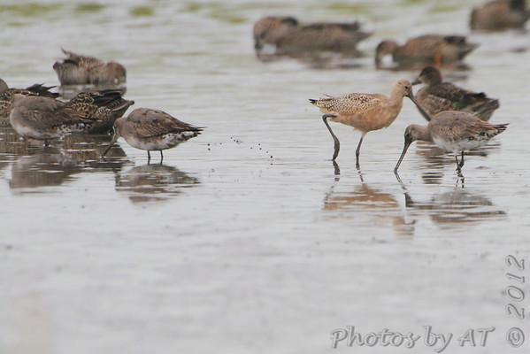 2012-09-14 Riverlands Migratory Bird Sanctuary