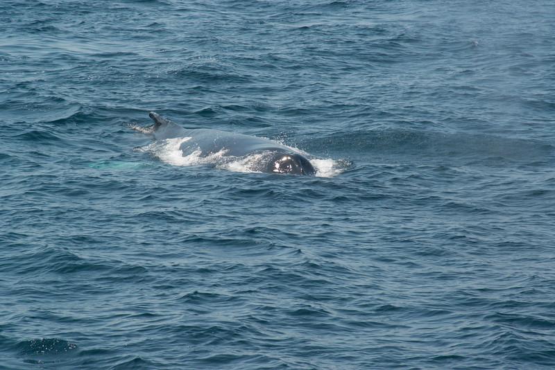 humpbacks-4180.jpg