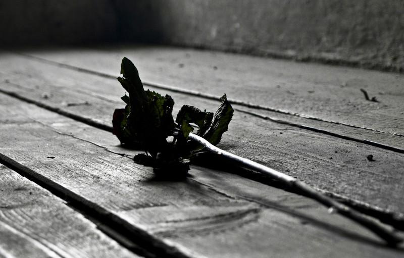 En rose for de døde (Foto: Ståle)