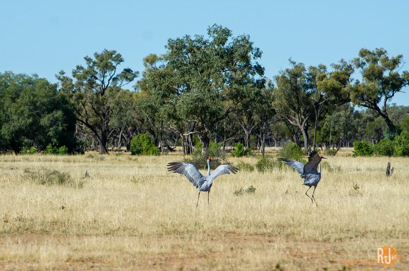 Australia-queensland-Cunnamulla-4305.jpg