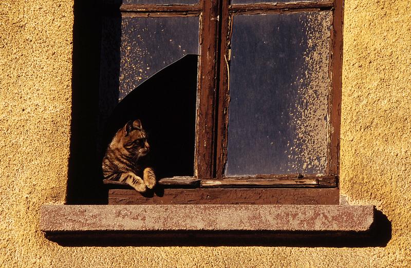 b__DSC1625_sirkeci_cat.jpg