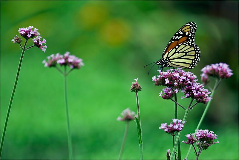 20110926_Butterfly_03.jpg