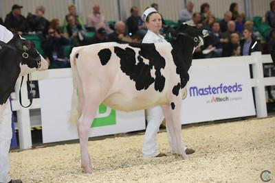 RWF Holstein Calves 2016
