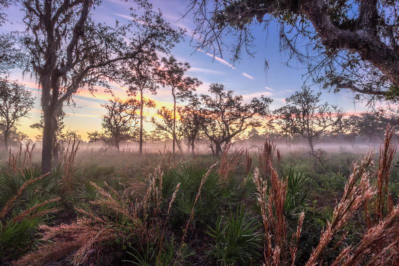 Before sunrise at Split Oak Forest