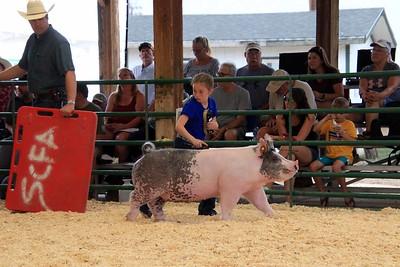 Market Swine 3