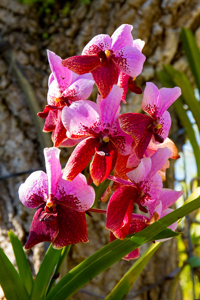 naples_botanical_garden_0051-LR.jpg