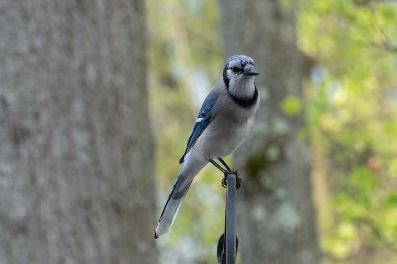 birdfeeder-7253.jpg