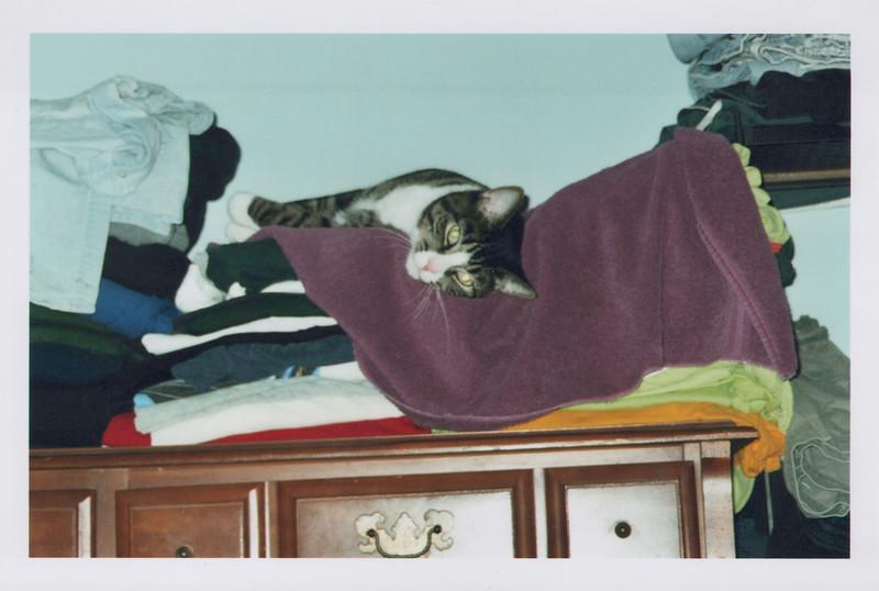 2005_Cats_0001.jpg