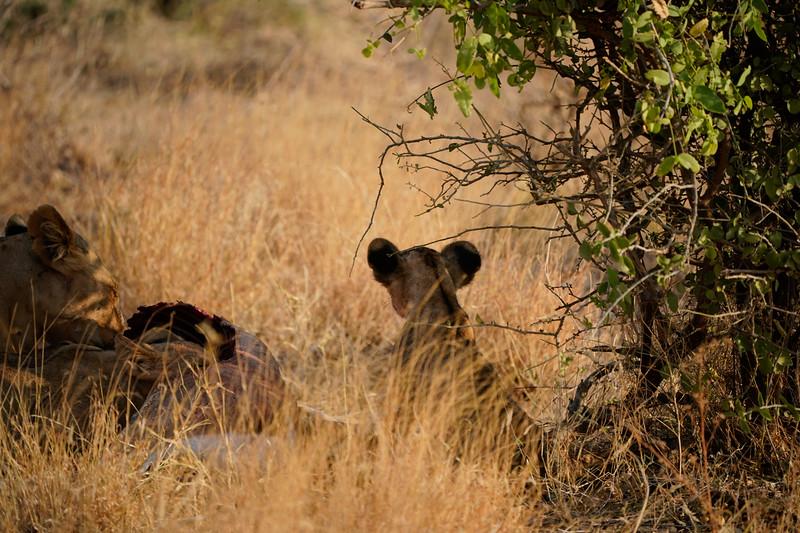 safari-2018-50.jpg