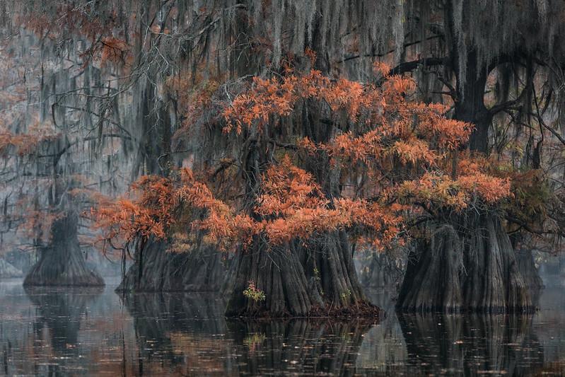Cypress_Swamps_1117_PSokol-848-Edit.jpg
