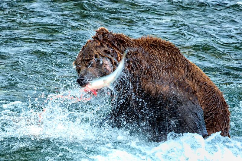 Alaska_2014_FH0T7676.jpg