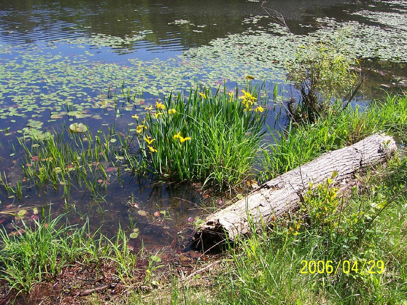 pond_flowers.jpg