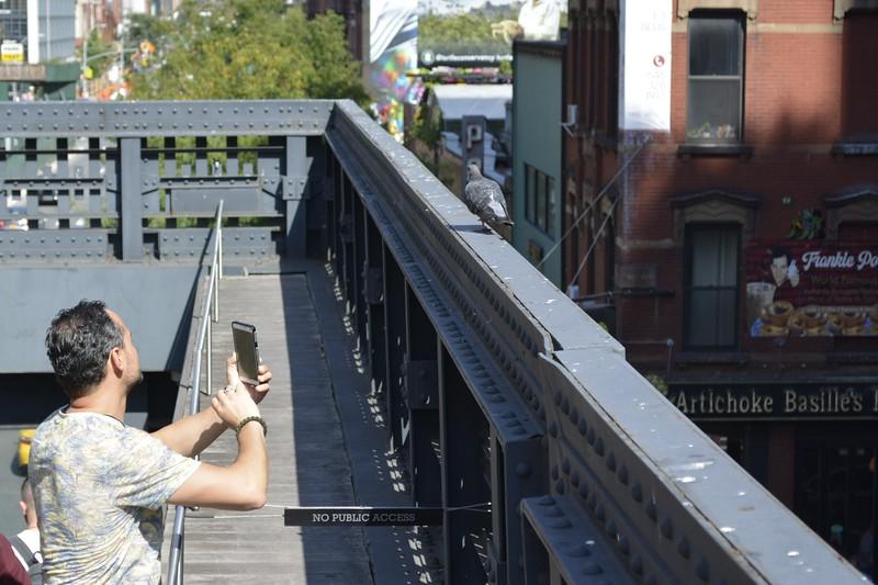 High Live NYC