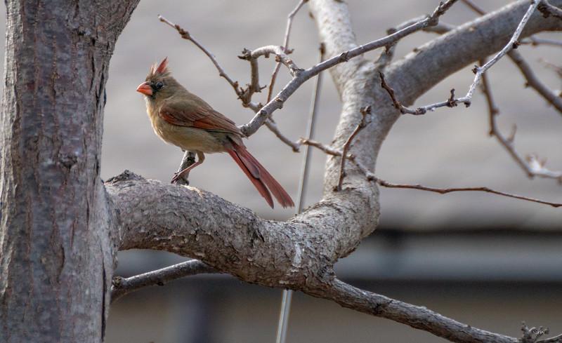 Arboretum Spring Bird-16.JPG