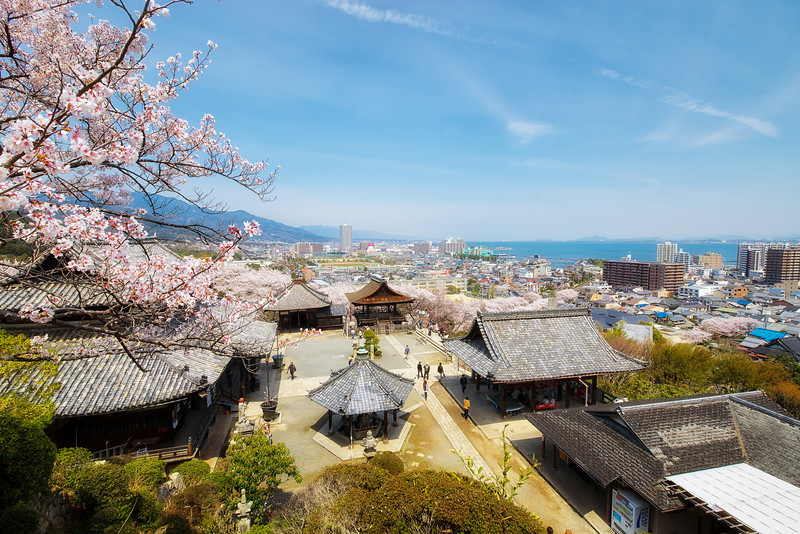 Cherry Blossoms Over Looking Lake Biwa