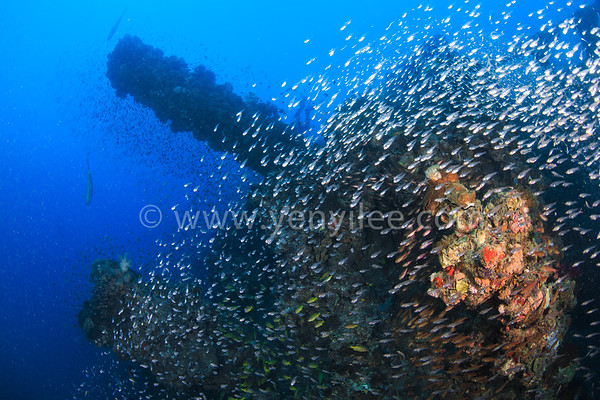 Australia - Cairns and Yongala Wreck  澳洲 凱恩斯