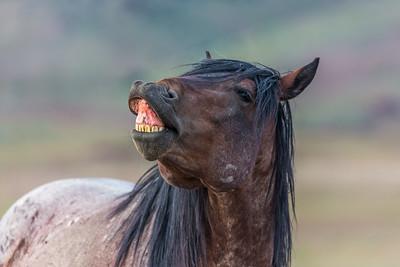 Wild Horses of Simpson Springs - 2016