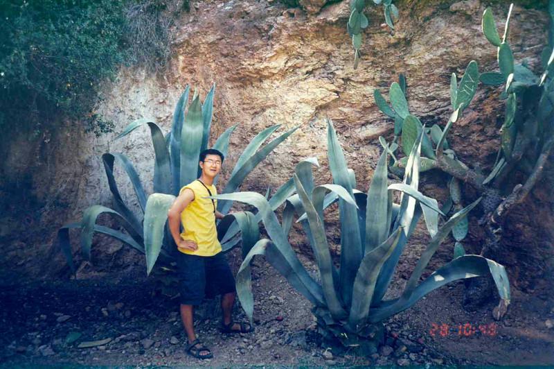 Killer Cacti.jpg