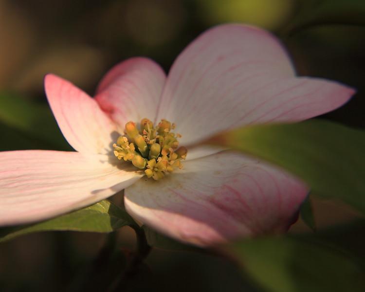 130414_IMG_1764r2a_6321_Blossoms.JPG