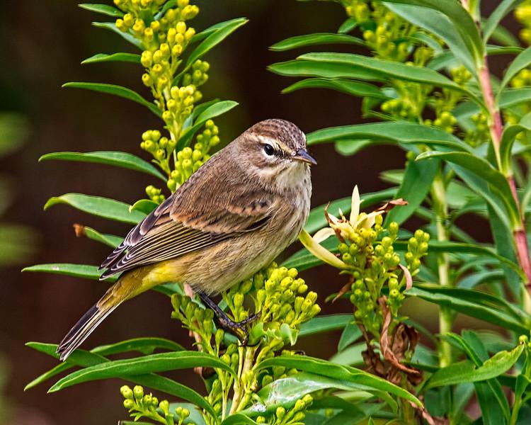 Cape May bird-.jpg