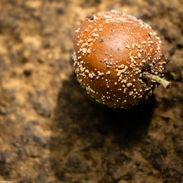 A Rotten Apple
