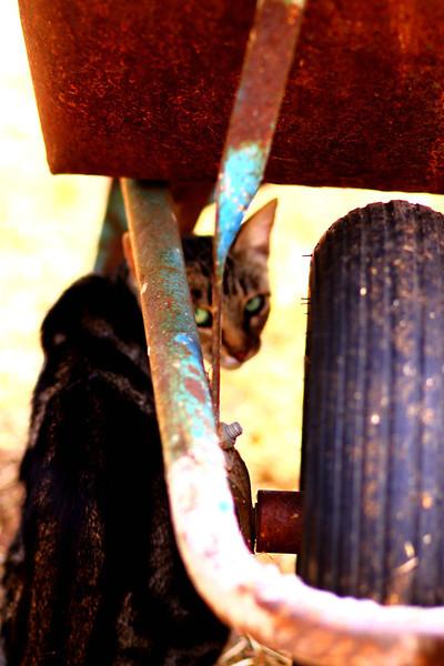 Aug Kitties and Kiddies (28).JPG
