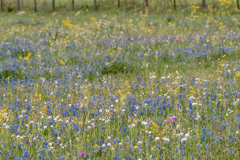 Texas Spring-0639.jpg