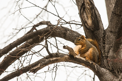 3-3-16 Ice Cream Squirrel