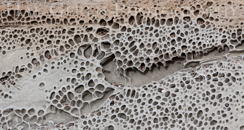 Tafoni patterns (carved sandstone) Bean Hollow State Beach, California 1401M-SP3