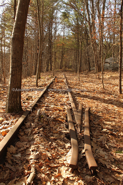 Railway / train tracks in the woods