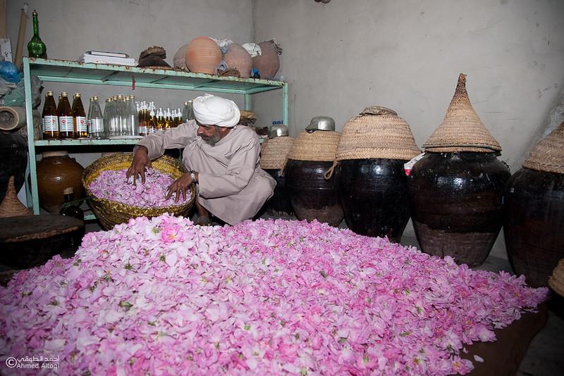 Roses Water (83)-Aljabal Alakhdhar-Oman.jpg