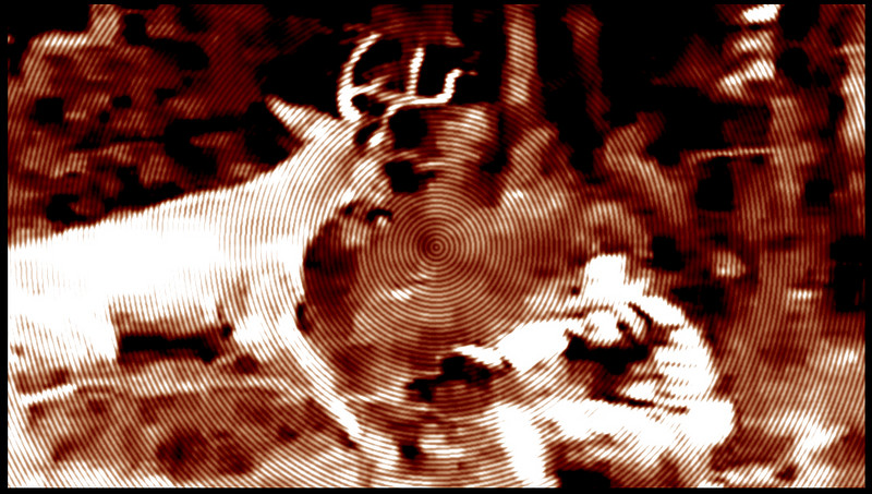deer-attack.jpg