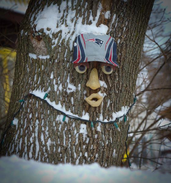 """Pat"" the Tree"
